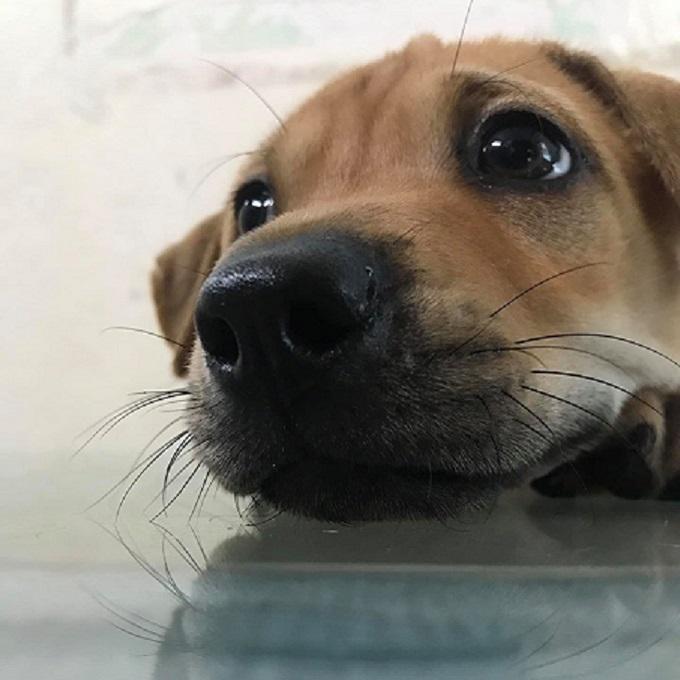 Bệnh parvo trên chó