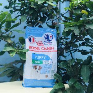 Thức ăn viên Royal canin mini puppy 800g - Thức ăn dành cho các bé cún từ 2 đến 10 tháng tuổi thuộc giống chó nhỏ, có trọng lượng khi trưởng thành dưới 11kg.