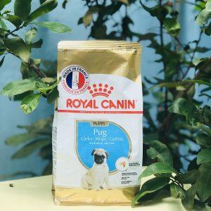 Thức ăn viên Royal Canin Pug Mini 500g - dành cho dòng chó Bug có độ tuổi từ 2 đến 10 tháng.