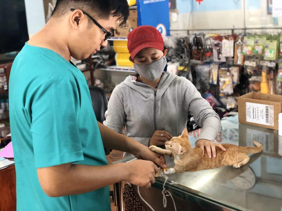 Bác sỹ phòng khám thú y Thành Trung đang khám cho bé mèo