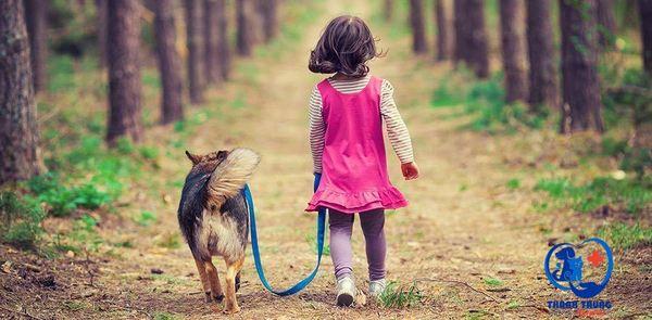 Những ai nuôi cún đều biết, chú ta không nên chỉ nhốt mấy bé ở nhà. Bé cún cần có không gian để được vận động, vui chơi. Để bé cún có được không gian thoải mái như vậy thì dẫn bé đi dạo ngoài đường và công viên là không thể thiếu. Tuy nhiên, các bạn cần chú ý một số để bé có thể được an toàn khi bạn đưa bé cún đi dạo.