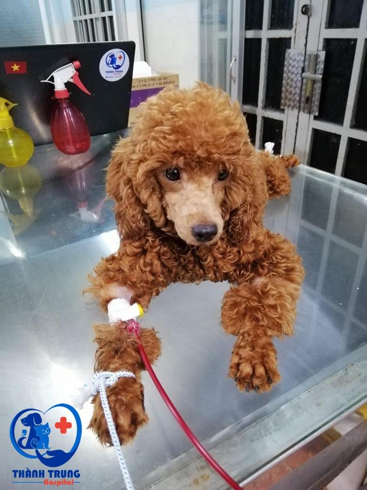 Truyền máu cho vật nuôi là kỹ thuật y sinh quen thuộc trong ngành thú y. Kỹ thuật hiện được ứng dụng rất nhiều trong ngành thú y để điều trị và cứu sống chó mèo, vật nuôi bị bệnh hoặc bị thương nặng.