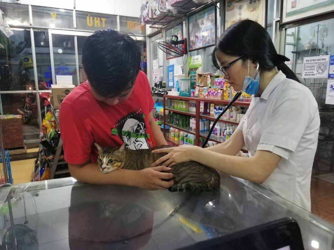 Bác sỹ kiểm tra sức khoẻ cho bé mèo tại phòng khám