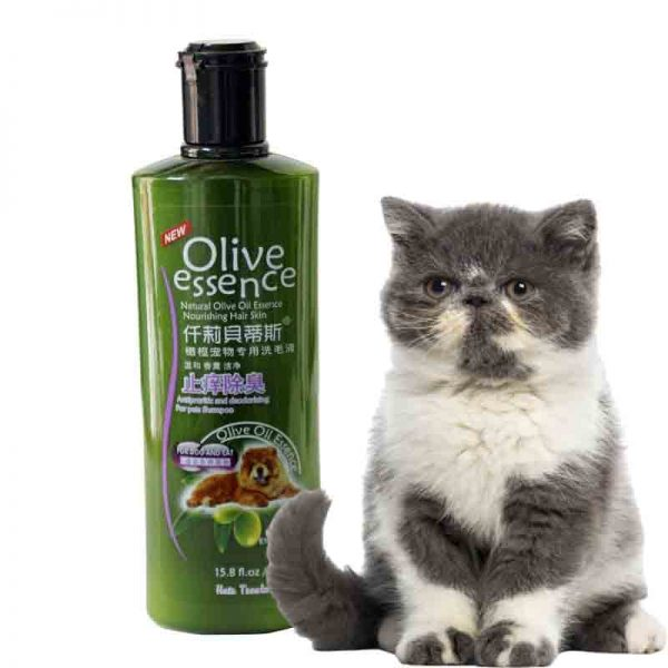 Sua-tam-olive-cho-cho-meo