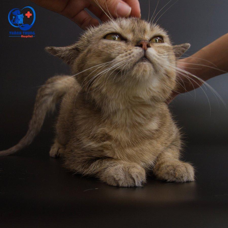triệt sản mèo