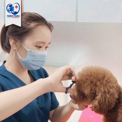 spa cho thú cưng 1
