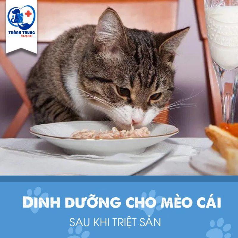 triệt sản cho mèo cái