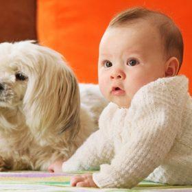 anh bé và cún