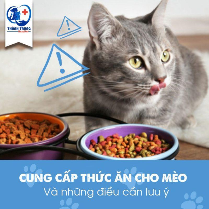 thuc-an-cho-meo
