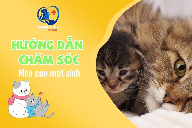 Huong-dan-cham-soc-meo-con-moi-sinh