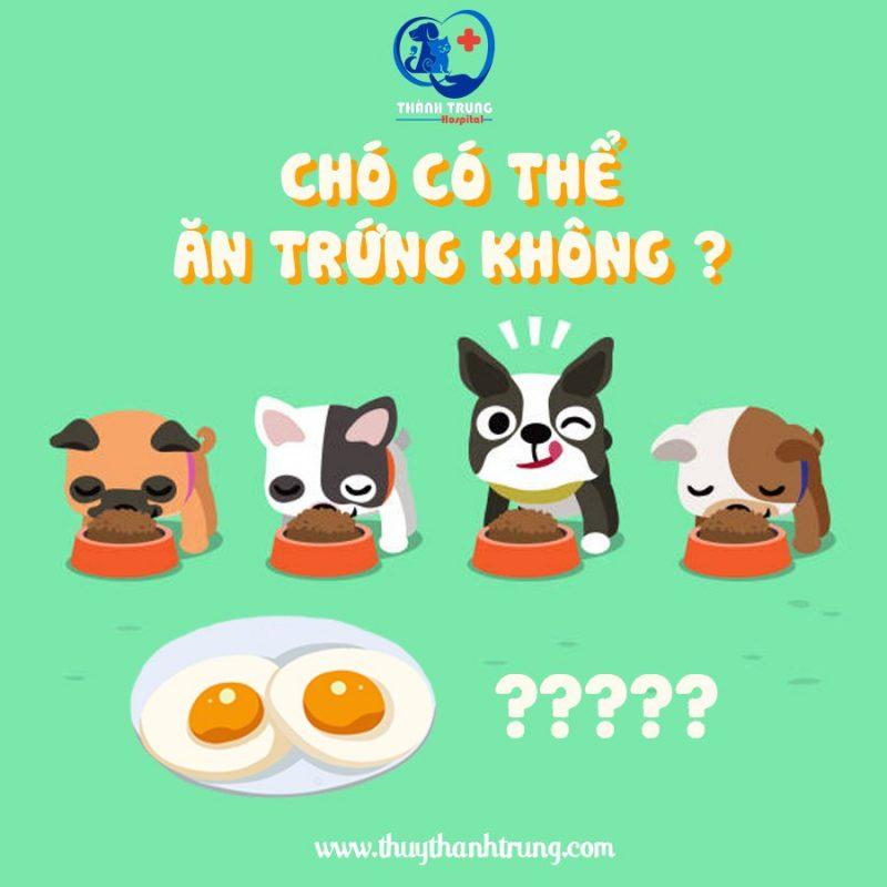 chó có thể ăn trứng không?