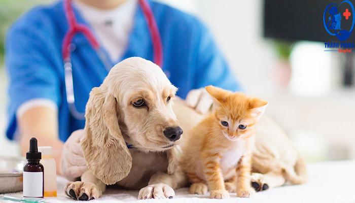 Chăm sóc chó mèo